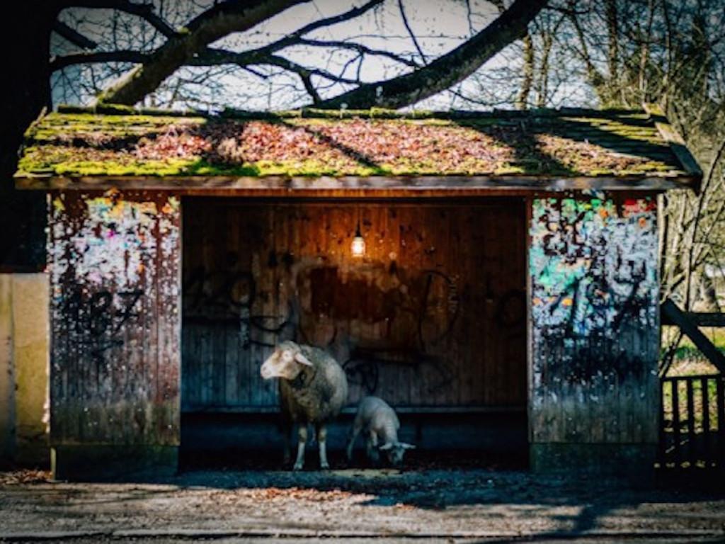 Vorstadtwolf, Stoner Pop