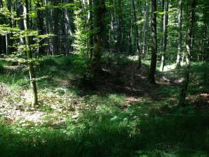 Bodendenkmal südlich von Windach