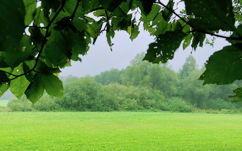 Die ganze Welt ist grün