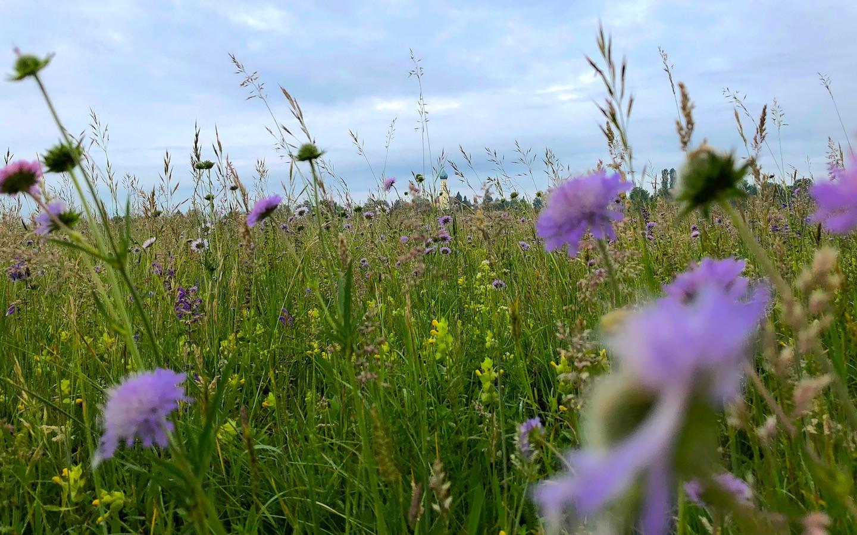 Artenvielfalt in Bayern