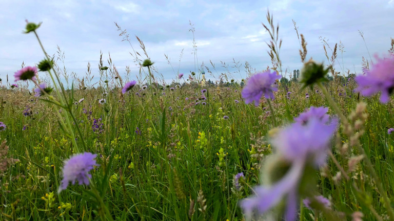 Blumenwiese, wie es sich das Volksbegehren Artenvielfalt wünscht