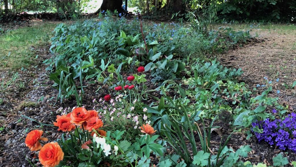 Blühflächen - Eine Idee für das Bürgerbudget