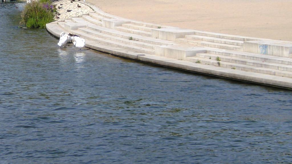 Ufertreppe am See