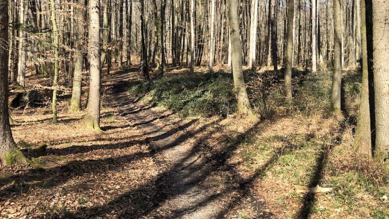 Trotz Corona im Wald spazieren gehen