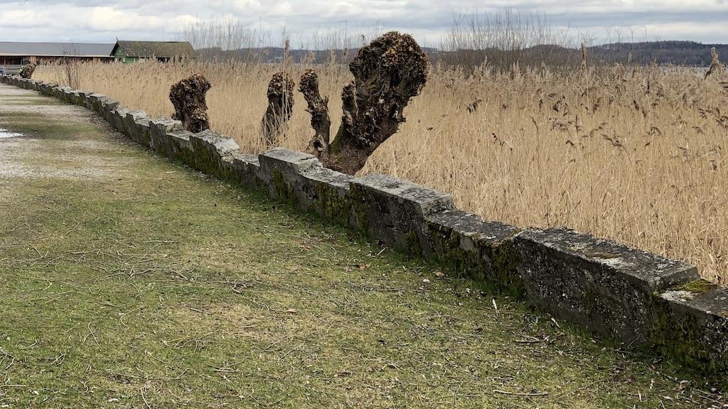 Ufermauer in Schondorf am Ammersee