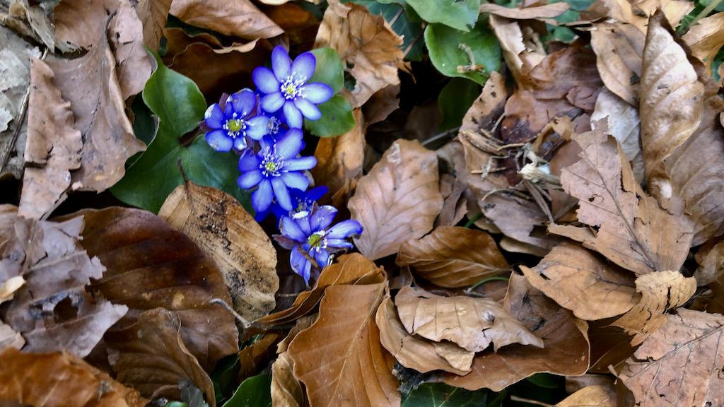Der wahre Frühlingsanfang am Ammersee