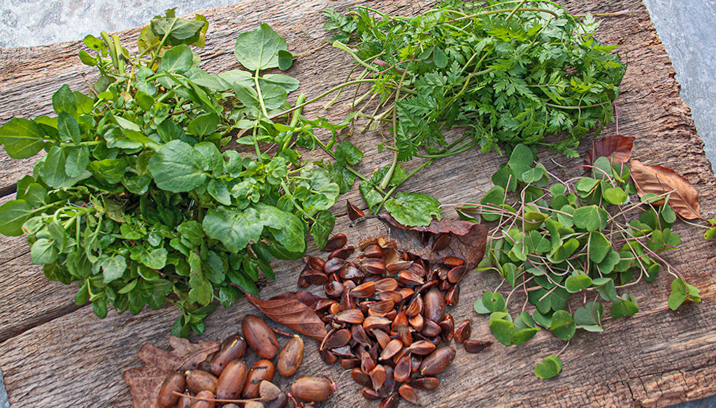Winter-Wildpflanzen im Kochlust Blog