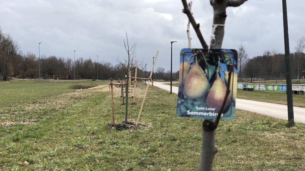 50 Bäume für Schondorf im Rahmen des Bürgerbudgets