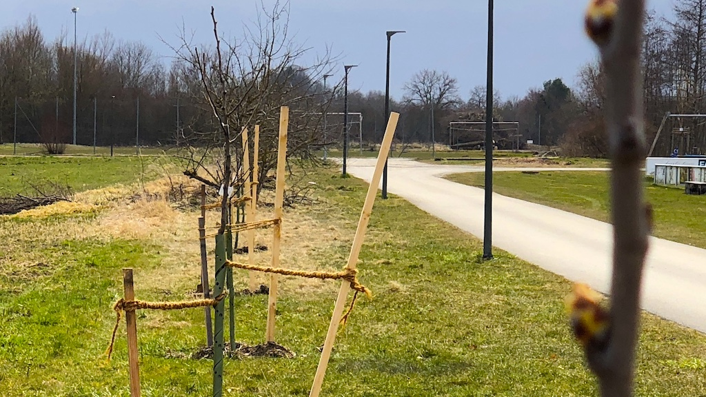 50 Bäume für Schondorf am Sportplatz