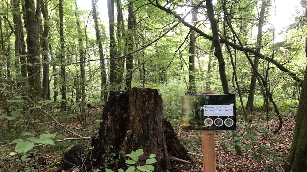 Du suchst Ruhe im Wald – Wir auch