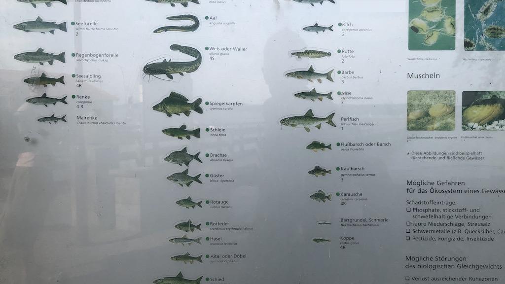 Fauna im Ammersee