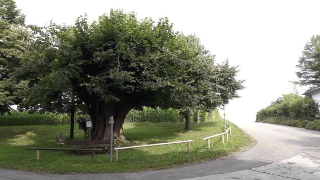 Linden in Schondorf