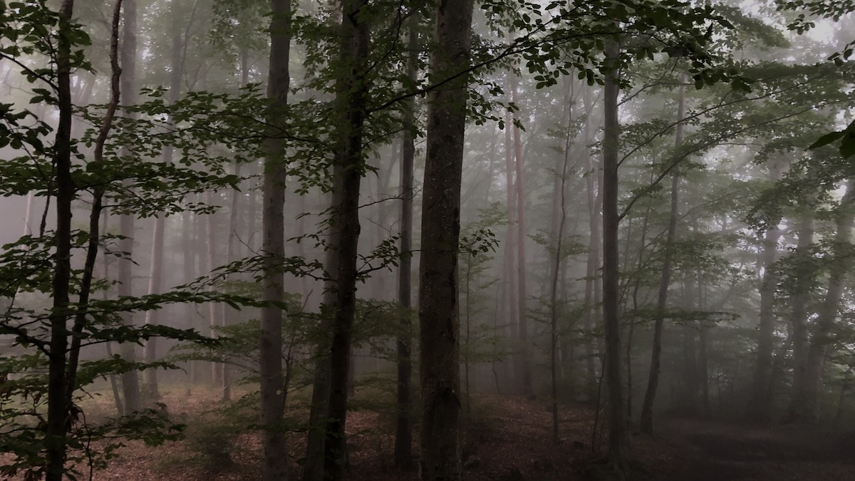 Theater-Workshop im Wald